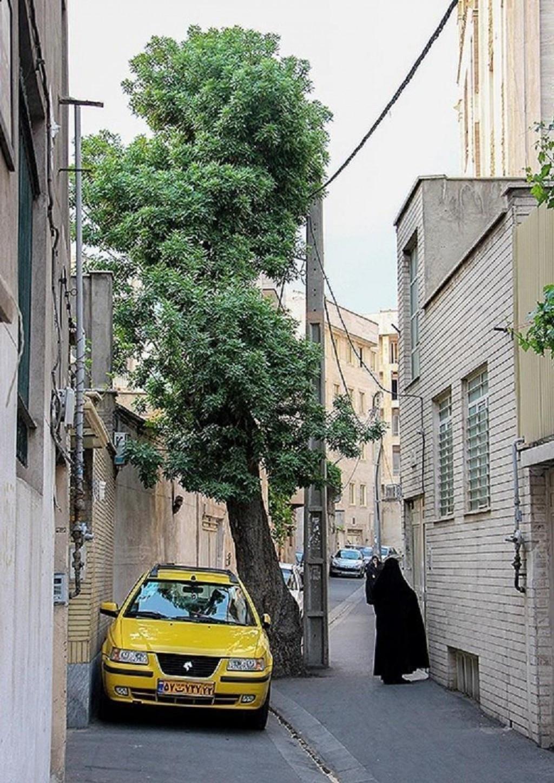 محله دیالمه تهران ۲نبش